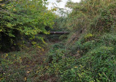Barranco de Picassent por su tramo 5