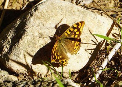 Fauna de los barrancos de Picassent